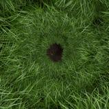 Τρύπα κουνελιών χλόης στοκ εικόνες