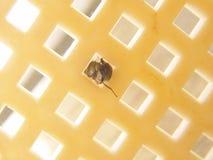 τρύπα μυγών γύρω από το τετράγ Στοκ φωτογραφία με δικαίωμα ελεύθερης χρήσης