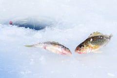Τρύπα πάγου για την αλιεία Στοκ εικόνα με δικαίωμα ελεύθερης χρήσης