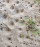 τρύπα προνυμφών του λιονταριού μυρμηγκιών Στοκ φωτογραφία με δικαίωμα ελεύθερης χρήσης