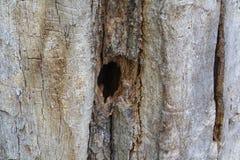 Τρύπα στο παλαιό δέντρο στοκ φωτογραφίες