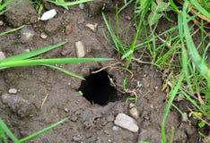 Τρύπα τρωκτικών στον κήπο Στοκ φωτογραφία με δικαίωμα ελεύθερης χρήσης
