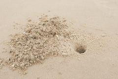 Τρύπες καβουριών Στοκ Εικόνες