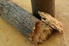 Τρύπες Woodworm Στοκ εικόνες με δικαίωμα ελεύθερης χρήσης