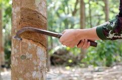 Τρύπημα του λατέξ από ένα λαστιχένιο δέντρο. Στοκ εικόνες με δικαίωμα ελεύθερης χρήσης