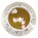 Τσάι ανθών της Apple στο άσπρο φλυτζάνι που απομονώνεται Στοκ Εικόνες