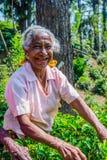 Τσάι γυναικείου μαδήματος Στοκ Φωτογραφίες