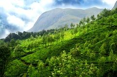 τσάι κήπων Στοκ εικόνες με δικαίωμα ελεύθερης χρήσης