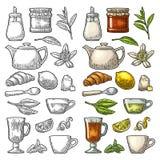 Τσάι και κλάδος πνεύματος φλυτζανιών με τα φύλλα Διανυσματική εκλεκτής ποιότητας χάραξη Στοκ φωτογραφία με δικαίωμα ελεύθερης χρήσης