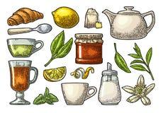 Τσάι και κλάδος πνεύματος φλυτζανιών με τα φύλλα Διανυσματική εκλεκτής ποιότητας χάραξη Στοκ Εικόνες