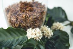 Τσάι καφέ λουλουδιών τσαγιού στο άσπρο υπόβαθρο γυαλιού Στοκ εικόνα με δικαίωμα ελεύθερης χρήσης
