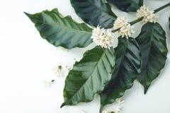 Τσάι καφέ λουλουδιών τσαγιού στο άσπρο υπόβαθρο γυαλιού Στοκ φωτογραφία με δικαίωμα ελεύθερης χρήσης