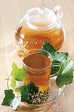Τσάι κισσών (έλικας Hedera) Στοκ Εικόνες