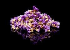 Τσάι λουλουδιών Sinuatum Limonium, statice, lavender θάλασσας, δεντρολίβανο έλους φύλλων εγκοπών, ροζ θάλασσας, wavyleaf lavender Στοκ εικόνες με δικαίωμα ελεύθερης χρήσης