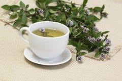 τσάι μεντών mentha aquatica Στοκ εικόνα με δικαίωμα ελεύθερης χρήσης