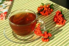 τσάι μούρων Στοκ εικόνα με δικαίωμα ελεύθερης χρήσης