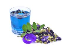 Τσάι μπιζελιών πεταλούδων στο γυαλί με το ξηρό λουλούδι μπιζελιών πεταλούδων Στοκ Εικόνες