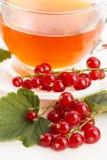 Τσάι στο φλυτζάνι και τη φρέσκια κόκκινη σταφίδα Στοκ Φωτογραφία