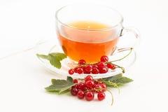 Τσάι στο φλυτζάνι και τη φρέσκια κόκκινη σταφίδα Στοκ φωτογραφία με δικαίωμα ελεύθερης χρήσης