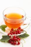 Τσάι στο φλυτζάνι και τη φρέσκια κόκκινη σταφίδα Στοκ εικόνες με δικαίωμα ελεύθερης χρήσης