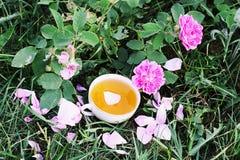 Τσάι στο ύφος χωρών στο θερινό κήπο στο χωριό Φλυτζάνι Vintafe του πράσινου βοτανικού τσαγιού και των ανθίζοντας ρόδινων τριαντάφ στοκ εικόνα με δικαίωμα ελεύθερης χρήσης
