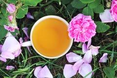 Τσάι στο ύφος χωρών στο θερινό κήπο στο χωριό Φλυτζάνι Vintafe του πράσινου βοτανικού τσαγιού και των ανθίζοντας ρόδινων τριαντάφ στοκ φωτογραφία με δικαίωμα ελεύθερης χρήσης