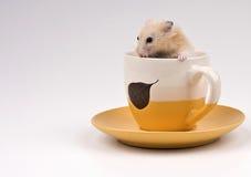 τσάι συνεδρίασης χάμστερ &ph Στοκ Εικόνες