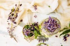 Τσάι του Ivan Στοκ φωτογραφία με δικαίωμα ελεύθερης χρήσης