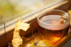 Τσάι φθινοπώρου Στοκ Εικόνες