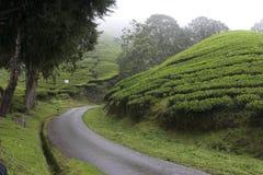 τσάι φυτειών ορεινών περι&omicro Στοκ Φωτογραφίες