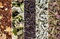 τσάι χορταριών συλλογής στοκ εικόνα