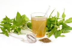 τσάι χορταριών Στοκ εικόνες με δικαίωμα ελεύθερης χρήσης