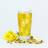 Τσάι χρυσάνθεμων Στοκ φωτογραφία με δικαίωμα ελεύθερης χρήσης