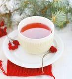 Τσάι Arrowwood Στοκ Εικόνες