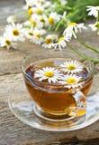 Τσάι Chamomile Στοκ εικόνα με δικαίωμα ελεύθερης χρήσης