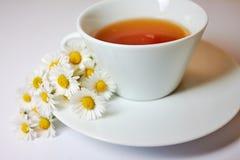 Τσάι Chamomile Στοκ εικόνες με δικαίωμα ελεύθερης χρήσης