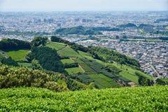 Τσάι fileds επάνω από Fujieda Στοκ Εικόνες