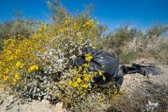 Τσάντα απορριμάτων απορριμμάτων που εγκαταλείπεται στην έρημο, δίπλα στα όμορφα κίτρινα wildflowers Λήφθείτε στην περιοχή θάλασσα στοκ εικόνες
