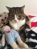 Τσέστερ η γάτα Στοκ φωτογραφία με δικαίωμα ελεύθερης χρήσης