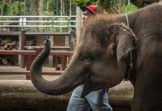 Τσίρκο ελεφάντων. Στοκ Εικόνα