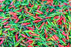 Τσίλι ματιών του οργανικού κόκκινου και πράσινου πουλιού, τσίλι ματιών πουλιών, γ του πουλιού Στοκ Εικόνες