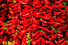 Τσίλι ως υπόβαθρο, κόκκινο τσίλι Στοκ Φωτογραφία