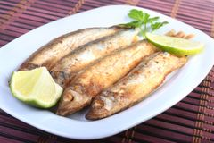 Τσιγάρισμα μικρού capelin ψαριών και του τεμαχισμένου λεμονιού στο άσπρο πιάτο Καλό πρόχειρο φαγητό στην μπύρα Στοκ Εικόνες