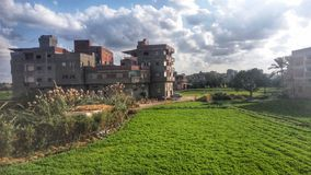Τσιμέντο και πράσινος Στοκ Φωτογραφίες