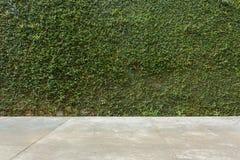 Τσιμεντένιο πάτωμα και πράσινος τοίχος φρακτών πετρών κισσών φύλλων καλυμμένος φυτό Στοκ εικόνα με δικαίωμα ελεύθερης χρήσης