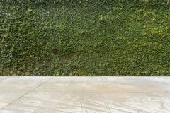 Τσιμεντένιο πάτωμα και πράσινος τοίχος φρακτών πετρών κισσών φύλλων καλυμμένος φυτό Στοκ Εικόνα