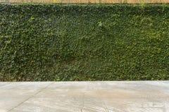 Τσιμεντένιο πάτωμα και πράσινος τοίχος φρακτών πετρών κισσών φύλλων καλυμμένος φυτό Στοκ Εικόνες
