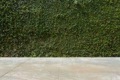 Τσιμεντένιο πάτωμα και πράσινος φράκτης πετρών κισσών φύλλων καλυμμένος φυτό Στοκ εικόνες με δικαίωμα ελεύθερης χρήσης