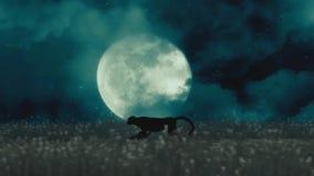 Τσιτάχ ή μαύρος πάνθηρας που τρέχει μέσω της νύχτας σε ένα υπόβαθρο πανσελήνων ελεύθερη απεικόνιση δικαιώματος