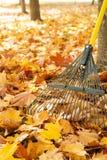 Τσουγκράνα μετάλλων, κορμοί δέντρων και σωρός των φωτεινών κίτρινων φύλλων σφενδάμου το φθινόπωρο Στοκ φωτογραφία με δικαίωμα ελεύθερης χρήσης